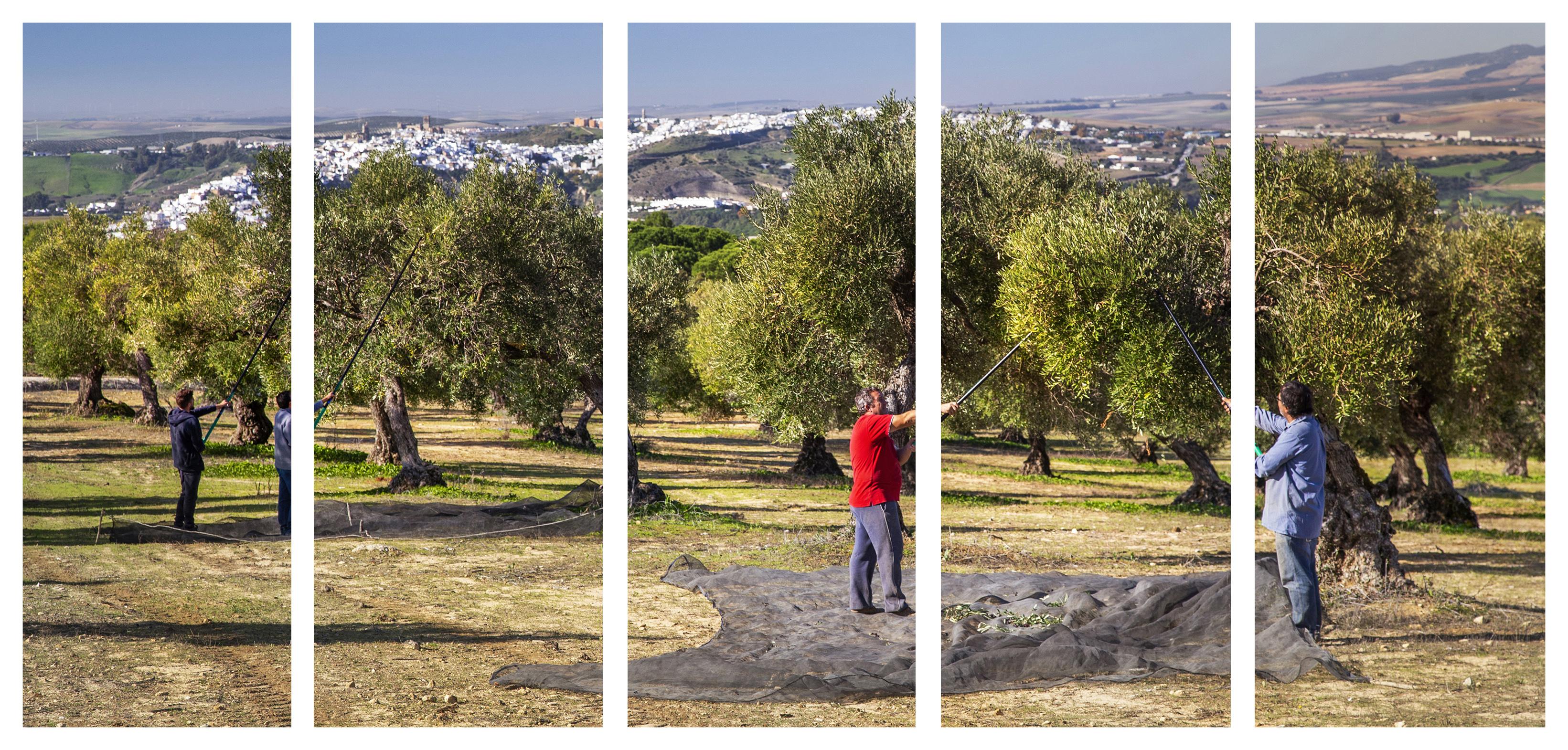 100% Ökologisches Olivenöl